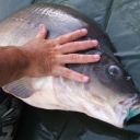 2008 horgász képek 2 054+1